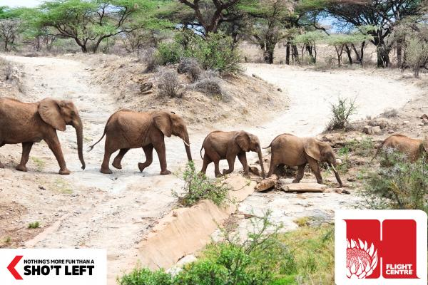 The bushveld landscape in Limpopo reveals a herd of elephants, which can be viewed as part of a Homegrown holiday package from Flight Centre.
